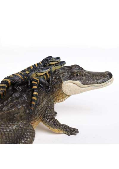 Aligátor s mladými