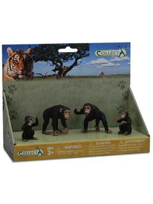 Šimpanzy – rodina