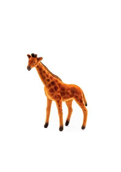 Žirafa – semiš